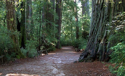 a lovely scene in big basin redwoods park